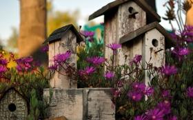 Картинка цветы, парк, фон, домики