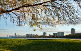 Картинка трава, город, дерево, небоскребы, Чикаго, Иллиноис, мичиган