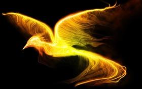 Обои полет, фантастика, огонь, птица, крылья, черный фон, феникс
