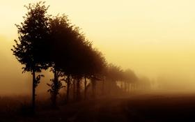 Обои деревья, природа, туман, утро, ряд