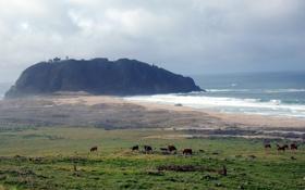 Картинка бриз, трава, луг, возвышенность, море, скала, горизонт