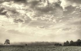 Картинка облака, туман, дерево