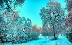Обои зима, иней, свет, снег, деревья, голубой