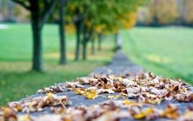 Картинка осень, листья, макро, размытость