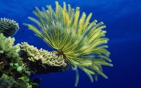 Обои море, морское дно, анемоны