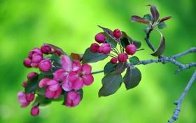 Обои макро, природа, дерево, ветка, весна, лепестки