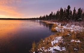 Картинка лед, зима, лес, трава, снег, озеро, сухая