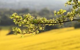 Обои лето, свежесть, ветки, ветка, весна, ветвь, цветение