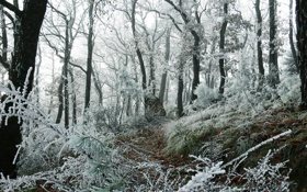 Обои зима, иней, лес, трава, снег, деревья, ветки