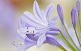Картинка цветок, листья, лепестки, тычинки