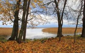 Обои осень, листья, вода, деревья, природа, осенние обои