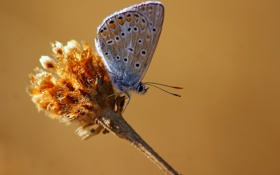 Картинка бабочка, стебель, насекомое