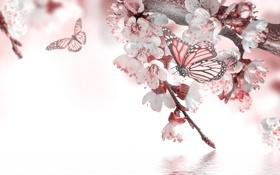 Обои вода, бабочка, весна, цветочки, цветение, веточки