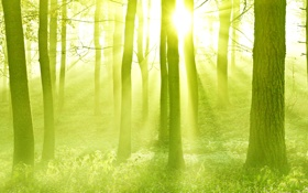 Обои лес, солнце, лучи, свет, деревья, закат, дымка