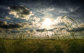 Картинка облака, небо, трава, Поле, солнце