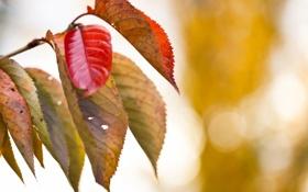 Обои листья, ветки, природа