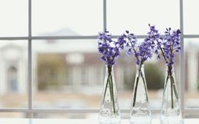 Обои цветы, лепестки, фиолетовые, ваза, сиреневые
