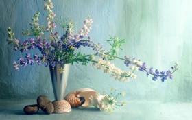 Обои галька, стена, Цветы, букет, ваза, ракушки