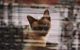 Картинка кот, взгляд, фон, кошак, котяра
