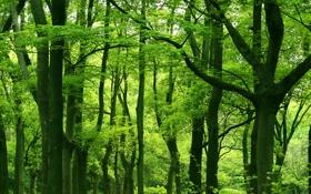 Обои зелень, листья, деревья, природа, дерево, листва, растения