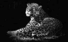 Обои пятна, фон, ягуар, шерсть, кошка