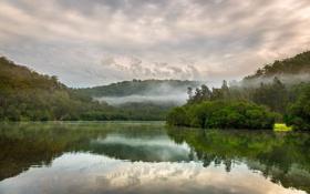 Картинка лес, природа, озеро, дымка, Australia, Berowa Creek