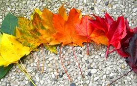 Обои листья, камни, осень, радуга, клён
