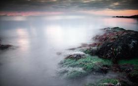 Обои море, водоросли, тучи, камни, спокойствие