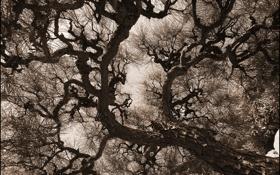 Обои иголки, ветки, дерево, ствол