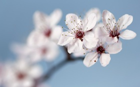Обои природа, фон, яблоня