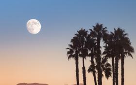 Картинка небо, деревья, пальмы, луна