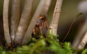 Обои насекомое, мох, ножки, грибы