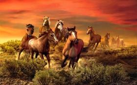 Обои животные, кони, живопись, Roberta Wesley, багровое небо, табун лошадей, The Wild Bunch