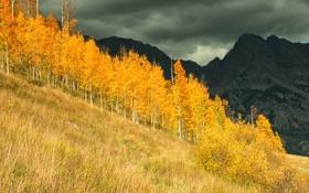 Картинка осины, лес, осень, роща, США, деревья, горы