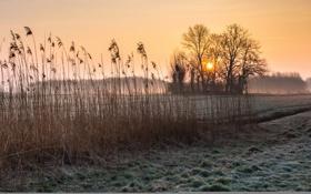 Картинка поле, осень, туман, утро