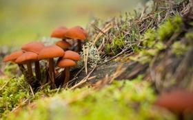 Обои лес, осень, грибы