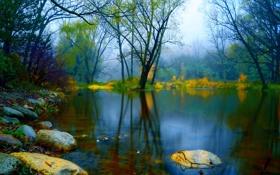 Картинка грусть, осень, вода, деревья, туман, пруд, камни