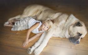 Картинка взгляд, друг, ребенок, собака