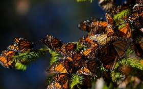 Обои bing, бабочки, ель