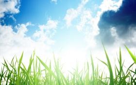 Обои природа, трава, небо, макро, фото