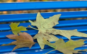 Обои листья, осень, парк, скамья