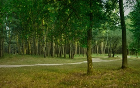Обои лес, зелёный, тропинка, лето