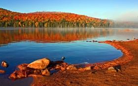 Обои осень, лес, небо, озеро, берег
