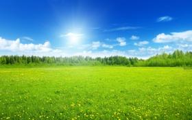Обои поле, солнце, облака, деревья, цветы