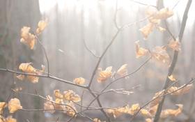 Обои Макро, Туман, Осень, Деревья, Листья, Ветка