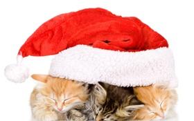 Обои кот, кошки, котенок, christmas, new year, праздники, новогодняя