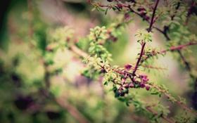 Обои Листья, Природа, Весна, Ветки, Макро, Фото, Дерево