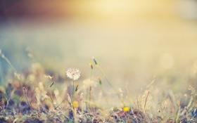 Обои свет, трава, день