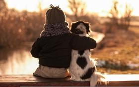 Картинка фон, собака, мальчик