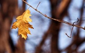 Обои осень, природа, листик, ветвь, autumn leaves